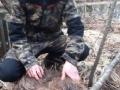 Tammisen Jessen ensimmäinen majava. 21kg naaras, polvijoelta eilen illalla